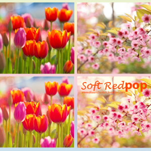 Soft Red Color Photoshop Action